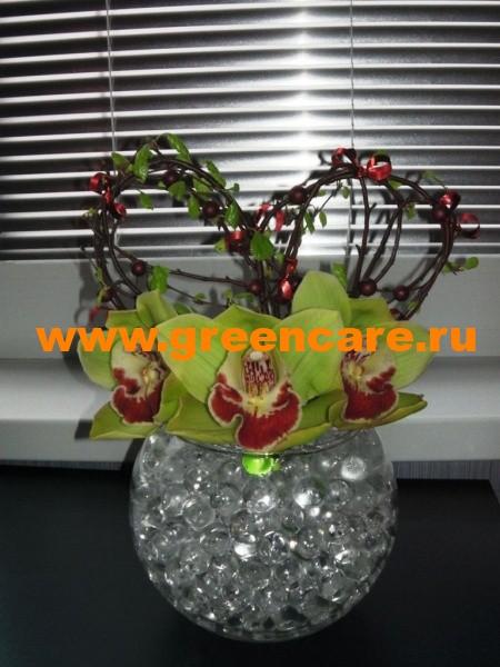 Можно ли орхидею сажать в гидрогель 96