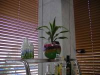 Драцена D-12 в Аквагрунте, ваза Шаровая 5л, ЦЕНА- 1335 рублей возможно любое сочетание цветов гидрогеля